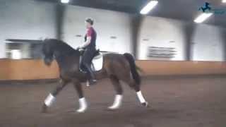 Unsere pferde vom ponyhof möllmann