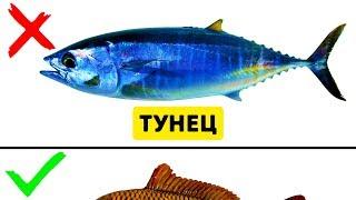 Download 9 Видов Рыбы, Которые Не Стоит Есть Mp3 and Videos