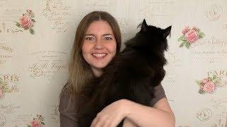 Норвежская лесная кошка. Происхождение породы