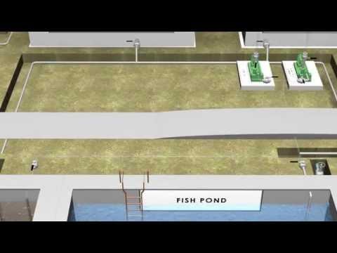 Fish Farming Concept - Animation