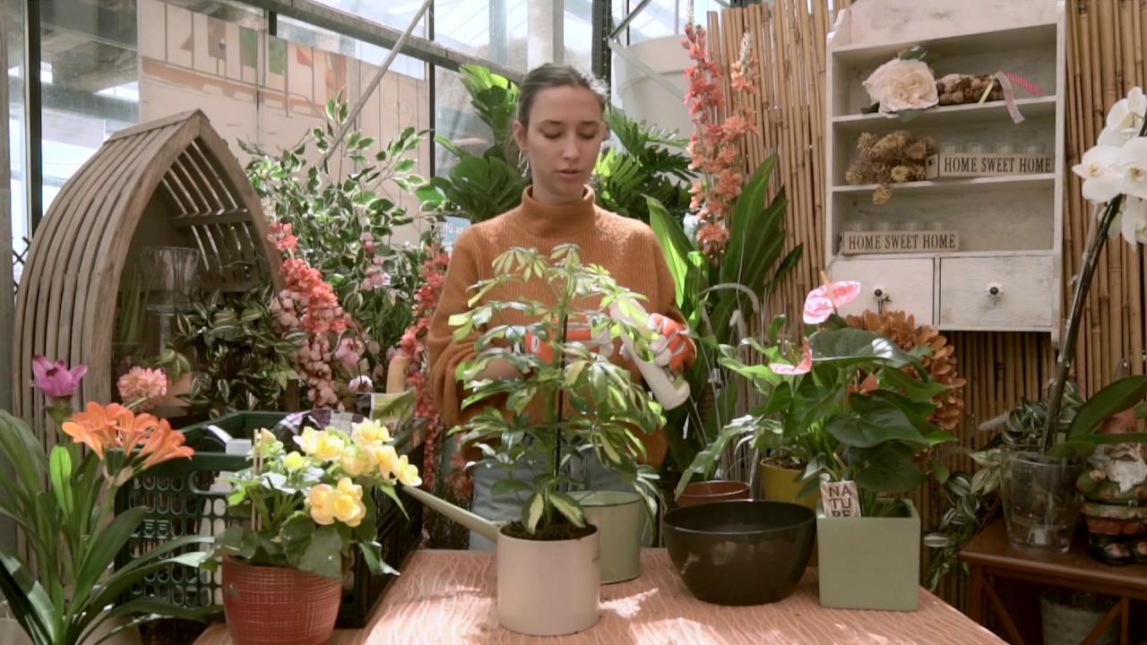 hamis virág parazita Ázsiából