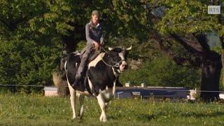 Download lagu La femme qui chuchotait à l'oreille des vaches