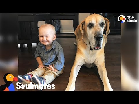 Massive Dog Takes Care Of His Favorite Little Boy | The Dodo Soulmates