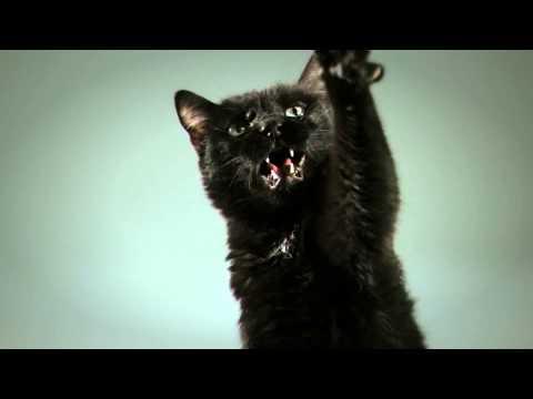 Black Cat vs Black Panther