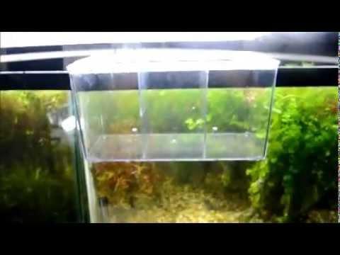 Achetez en Gros interne skimmer aquarium en Ligne à des