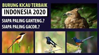 Burung Kicau Terbaik 2020 - Burung gacor murah tapi berkualitas