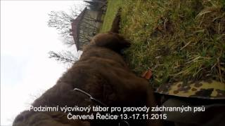 SAR DOG CZ   Chesapeake bay Retriever   GREYJOY