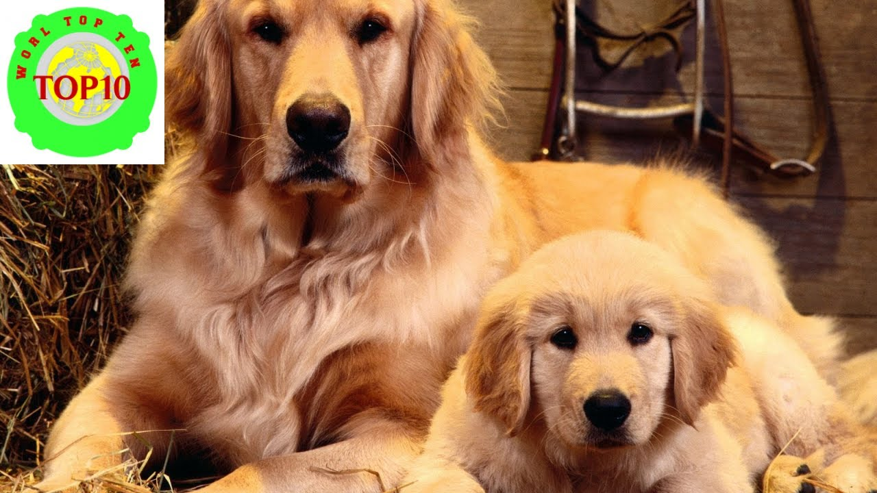 10 most exceptional dogs