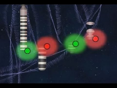9;22 FISH Probe Animation (Fluorescence In Situ Hybridization)