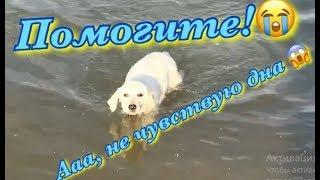 Лабрадор Бэтти учится плавать | Почему именно лабрадор!? Ответ на злой комментарий.