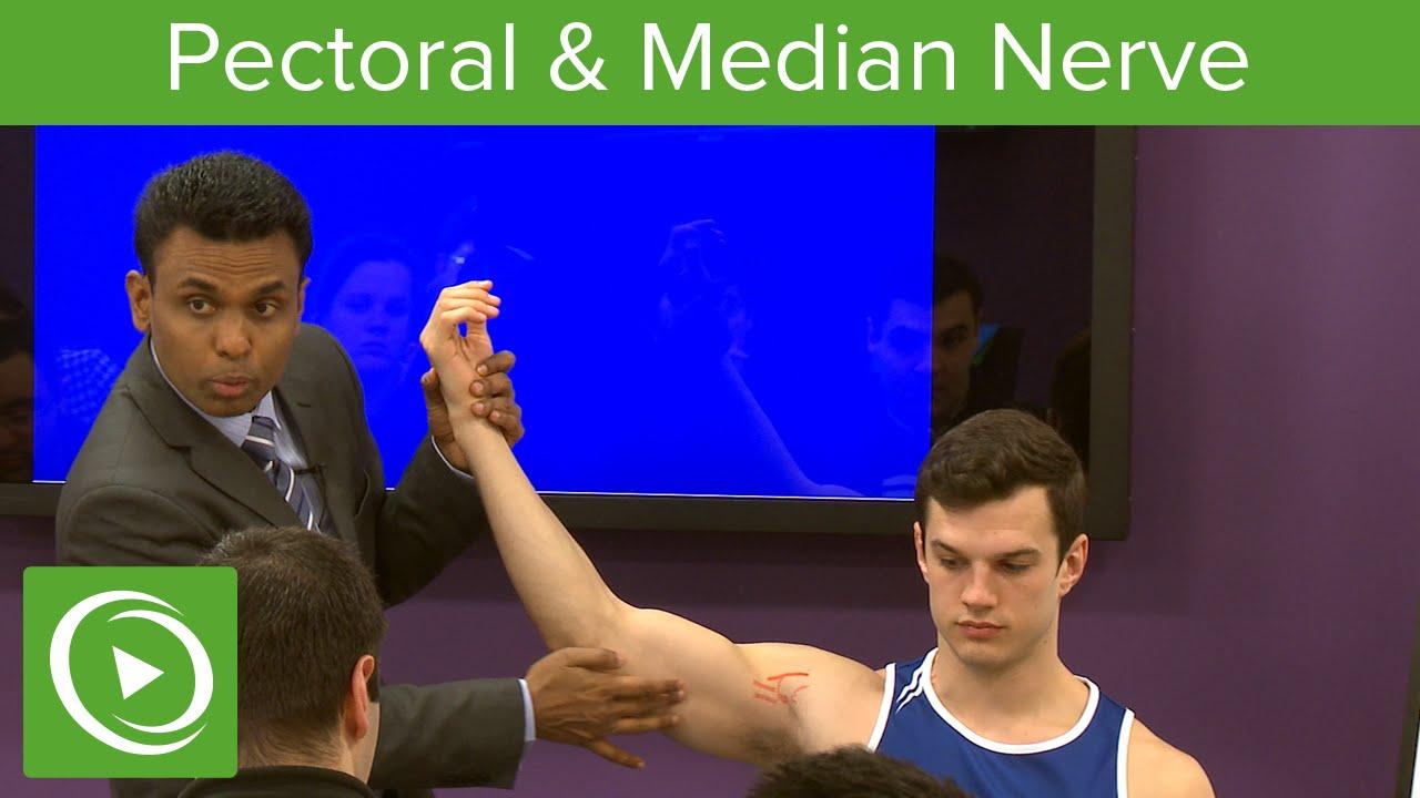 Pectoral & Median Nerve  – MRCS | Lecturio