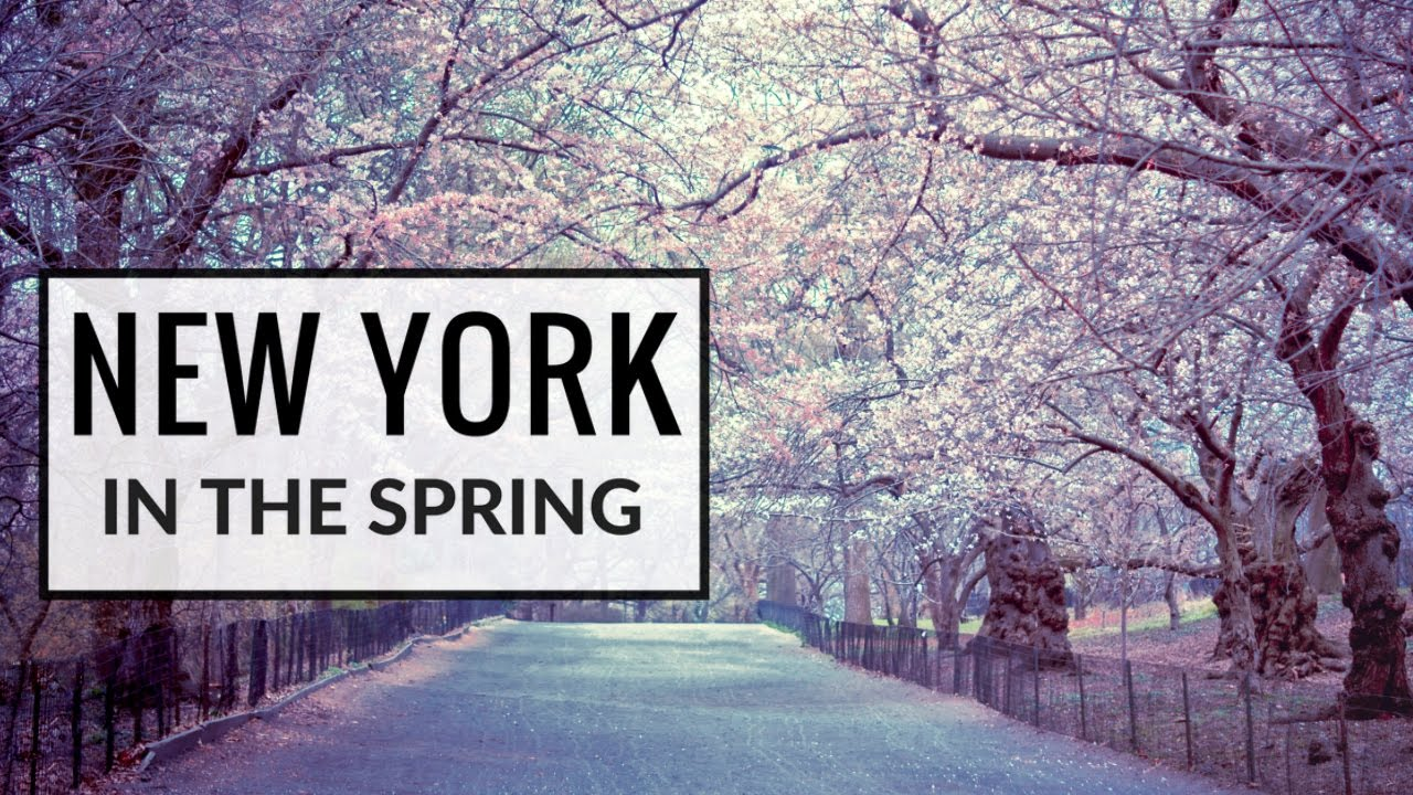 New york in the springtime cherry blossoms new york city spoken new york in the springtime cherry blossoms new york city spoken word vivienne gucwa publicscrutiny Choice Image