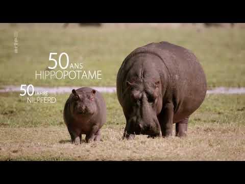 Doku -  Umwelt und Natur Tierisch alt! Lange leben