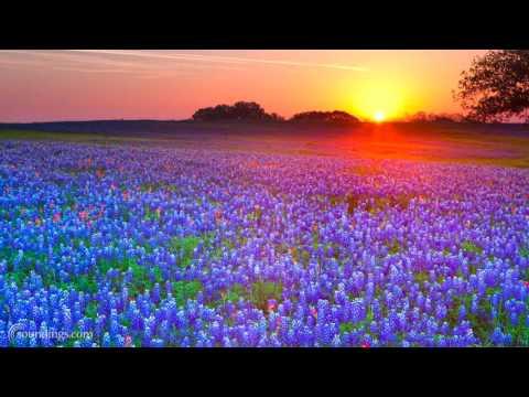 Soft Wellness Music Playlist - Dean Evenson Sound Healing Mix,