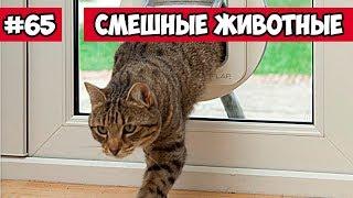 Смешные животные - коты пофигисты | Bazuzu Video ТОП подборка ноябрь 2017