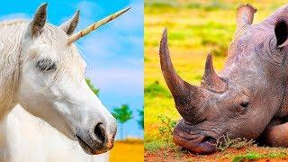 Come Mai Gli Unicorni Sono Ancora Così Popolari?