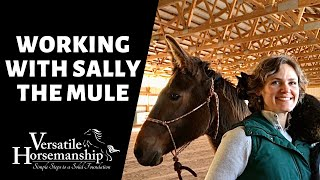 🔴 WORKING WITH SALLY THE MULE (live-stream) // Versatile Horsemanship