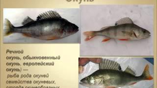 Презентация Рыбы