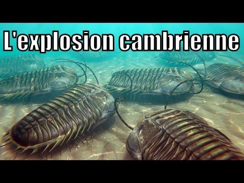L'explosion cambrienne et les schistes de Burgess Image 1