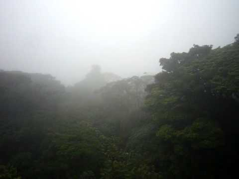 Wind in Monteverde, Costa Rica
