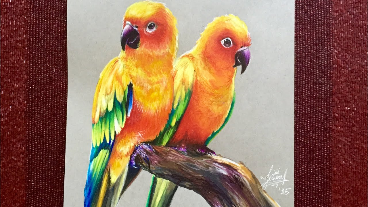 Realistic Drawing Of Parrots Sun Parakeets Youtube