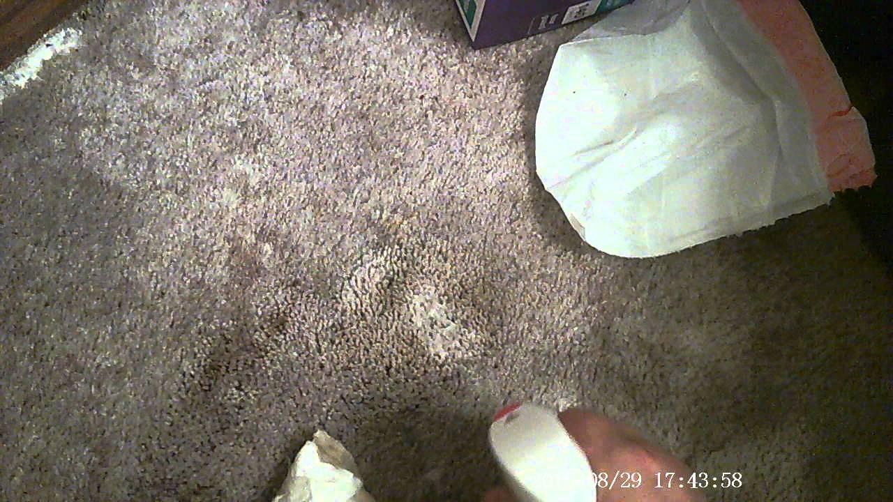 Highest Rated Carpet Sn Remover Carpet Vidalondon