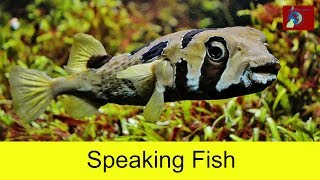 funny aquarium fish talking to each other as friends