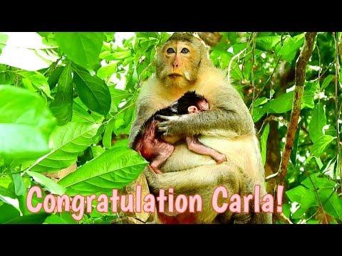 Natural Wildlife - Congratulation! Mom Carla just gave birth newborn baby Charlee