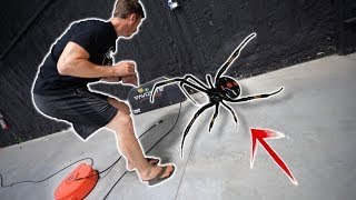 We Are INFESTED By DEADLY Spiders - Googan Warehouse