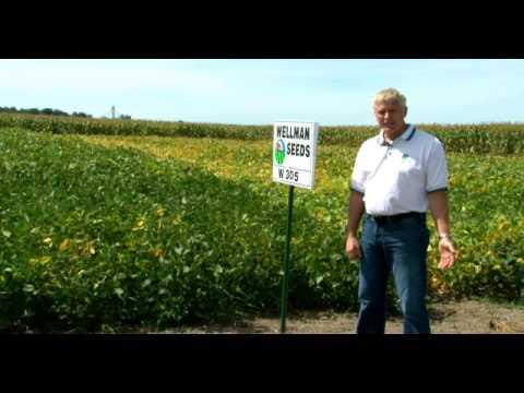 Wellman Seeds 2014 NON GMO Soybeans