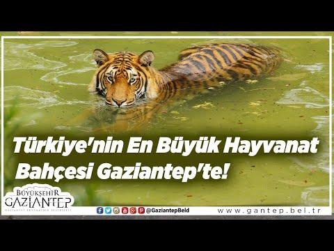 Türkiye'nin En Büyük Hayvanat Bahçesi Gaziantep'te!