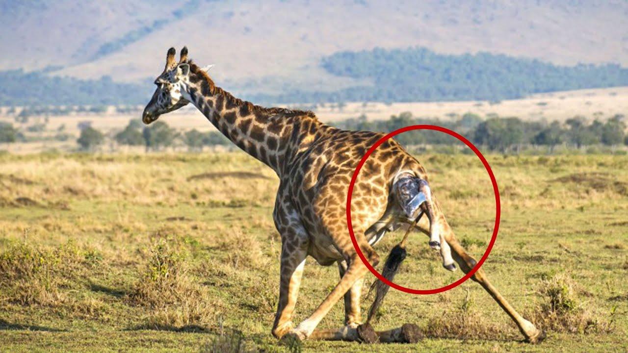 الأعجب والأغرب في حالات الإنجاب لدى الحيوانات