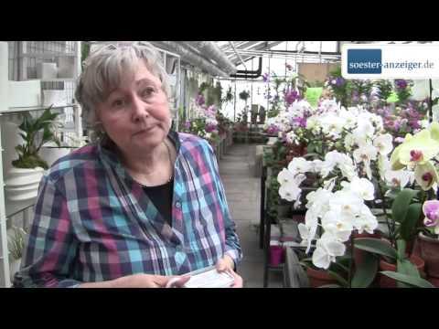 Expertin verrät, wie Orchideen gedeihen
