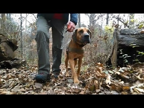 NOVA: Out of Control Boxer / Bloodhound