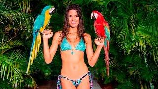 Прикольные птицы: смешные птицы видео, приколы с птицами, говорящие попугаи видео смотреть всем!