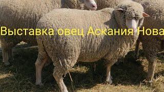 Выставка овец Аскания Нова