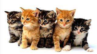 ударный  отряд котят №2