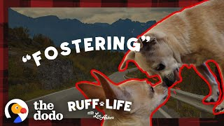 Watch What Happens When A 14-Year-Old Dog Finally Leaves The Shelter | Ruff Life With Lee Asher