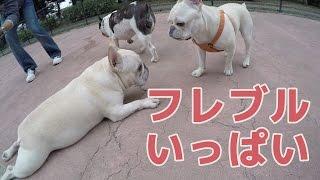 ペット乗せ自転車にこうめさんを乗せて駒沢公園のドッグランに行ったら...