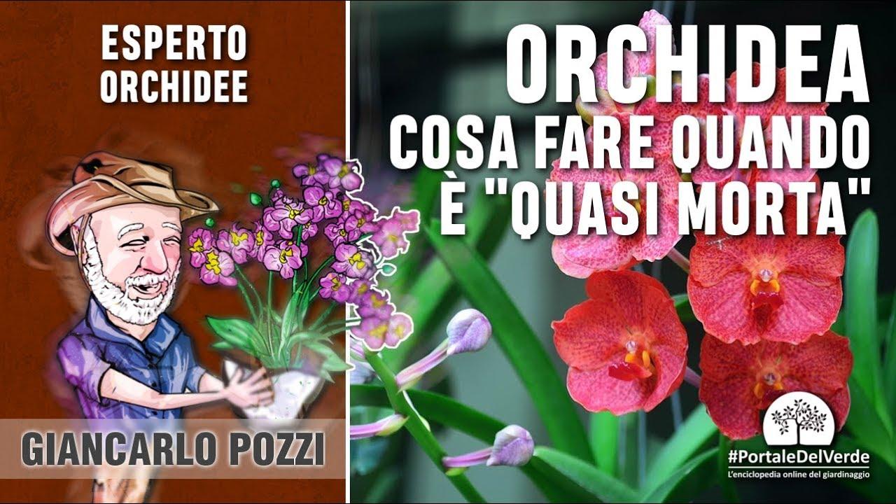 """Download Cosa fare quando un'orchidea è """"quasi morta"""""""