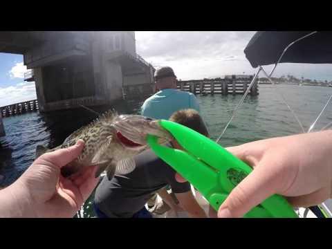 Bottom Fishing Tampa Bay