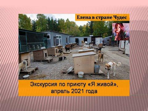 """Экскурсия по приюту для бездомных животных """"Я живой"""", апрель 2021 года"""