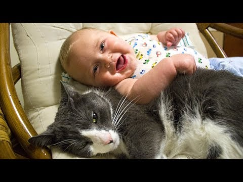 Cat Protecting Babies and Loving Very Much Compilation