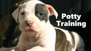 How To Potty Train A Pitbull Puppy - Pit Bull House Training Tips - Housebreaking Pitbull Puppies