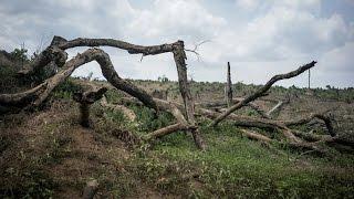 Земля может потерять пятую часть всех видов растений (новости)