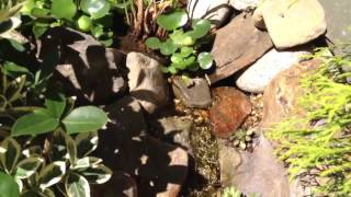 Diy Backyard Waterfall And Stream Pond Part 2