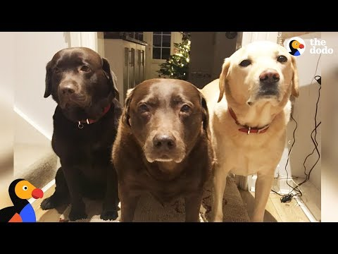 Senior Dog's Whole Family Helps Cart Her Around - REMY | The Dodo