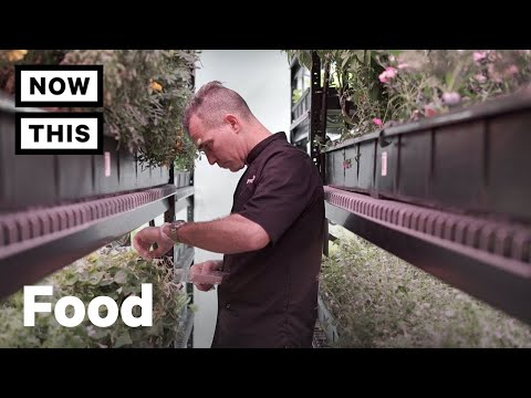 Farme.One is an Eco-Friendly Farm in the Heart of New York City | NowThis