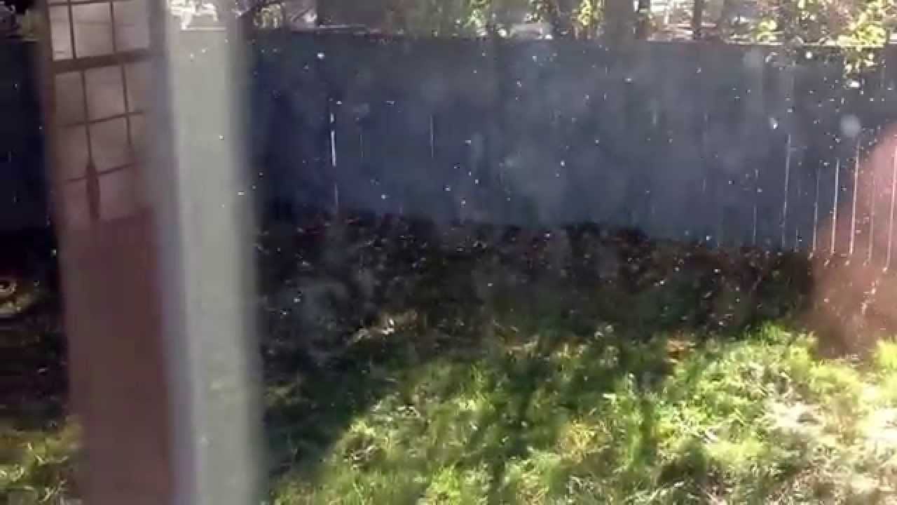 millions of gnats in my backyard youtube