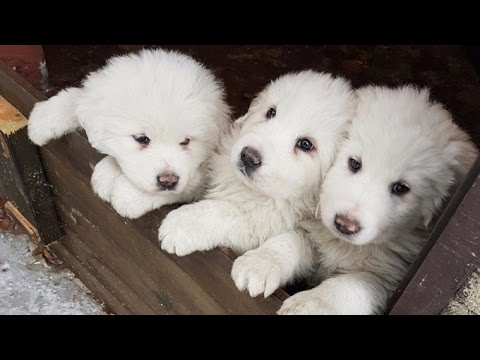 Puppies saved from Italian hotel five days after avalanche